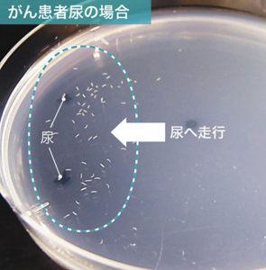 線虫で癌検査はいつからどこで受けられる?費用はいくら?